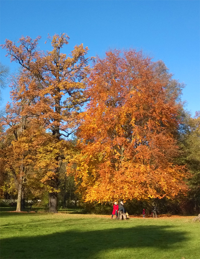 Indian Summer im Schlosspark Niederschönhausen